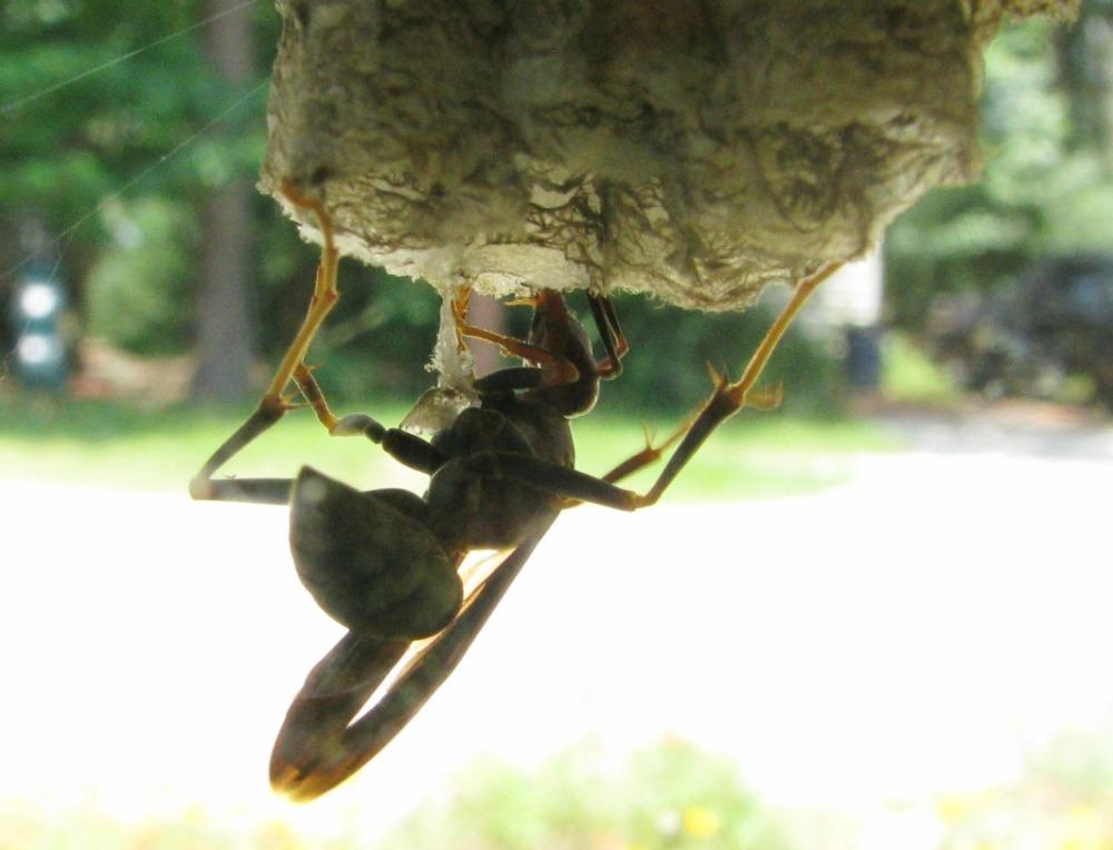 wasp10